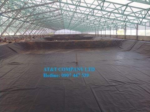 Ao nuôi tôm lót bạt trong nhà kính của Tập đoàn Việt Úc - CN Bạc Liêu - Ảnh AT&T