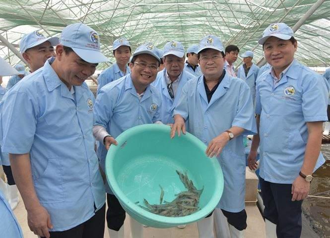 Phó thủ tướng Trịnh Đình Dũng khảo sát mô hình nuôi tôm siêu thâm canh trong nhà kính - Ảnh Internet
