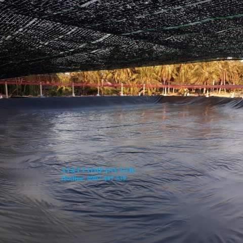 Mô hình nuôi tôm trong ao lót bạt, phủ lưới lan