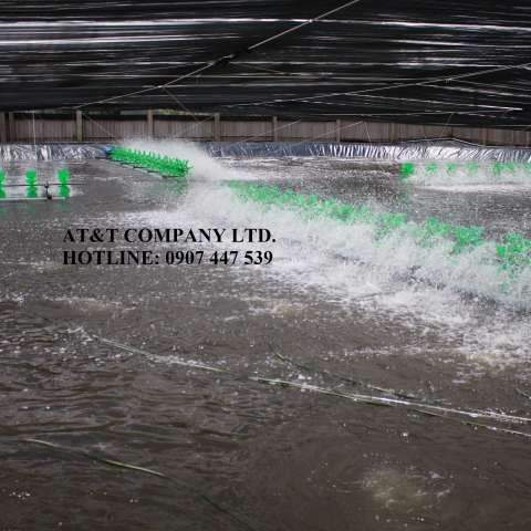 Chạy quạt tăng lượng ôxy trong nước